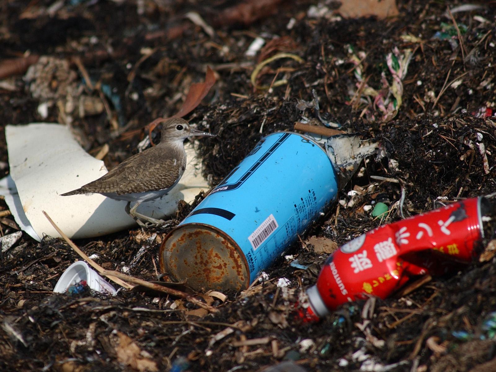 捨てられたゴミは海に集まる。