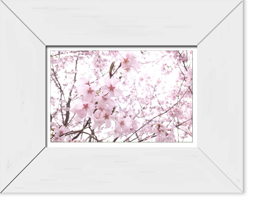 flowerframe_sample